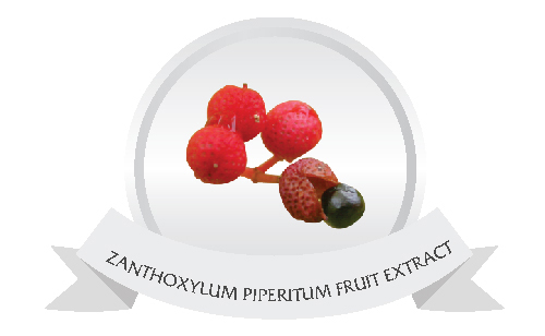 ZANTHOXYLUM PIPERITUM FRUIT EXTRACT