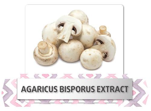 agaricus-bisporus-extract